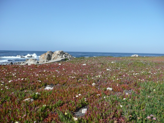 Pacific Grove  walk
