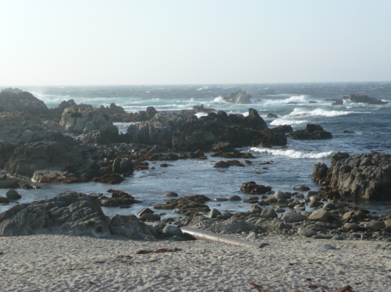 Rugged coastline of pacific grove